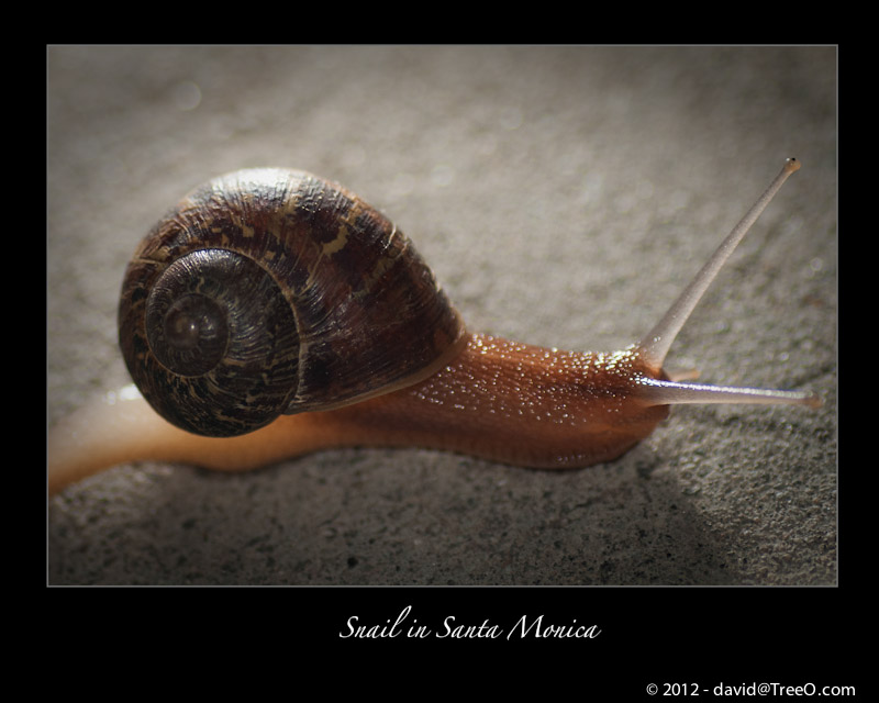 Snail in Santa Monica