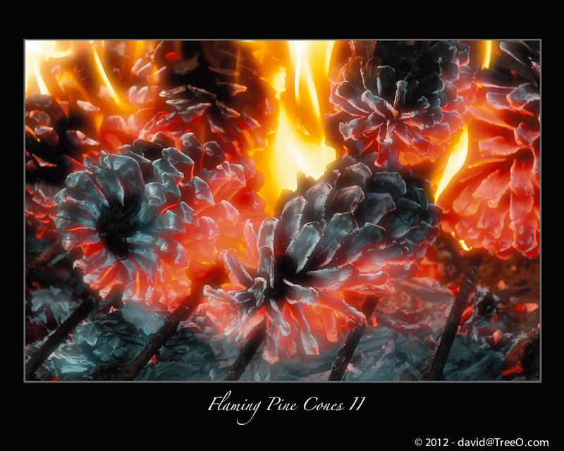 Flaming Pine Cones #2