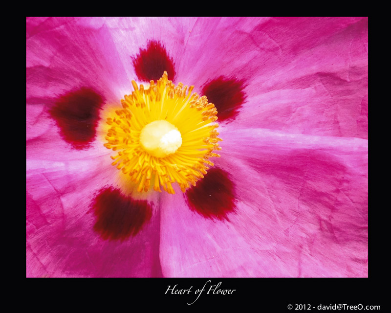 Heart of Flower