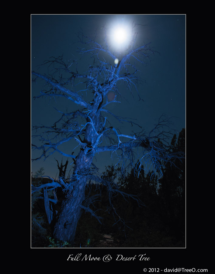 Full Moon & Desert Tree