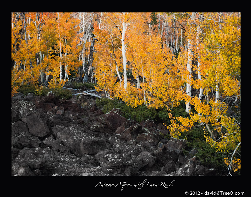 Autumn Aspens with Lava Rock