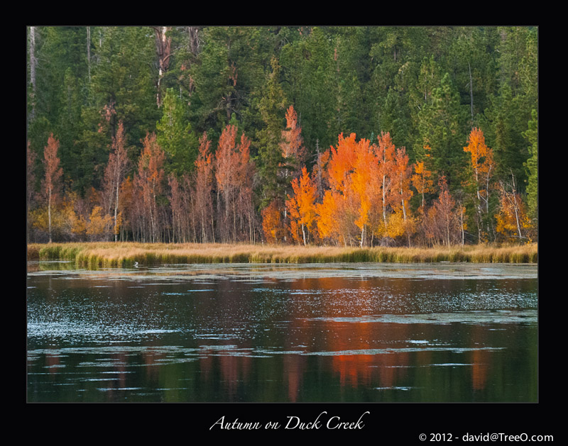 Autumn on Duck Creek