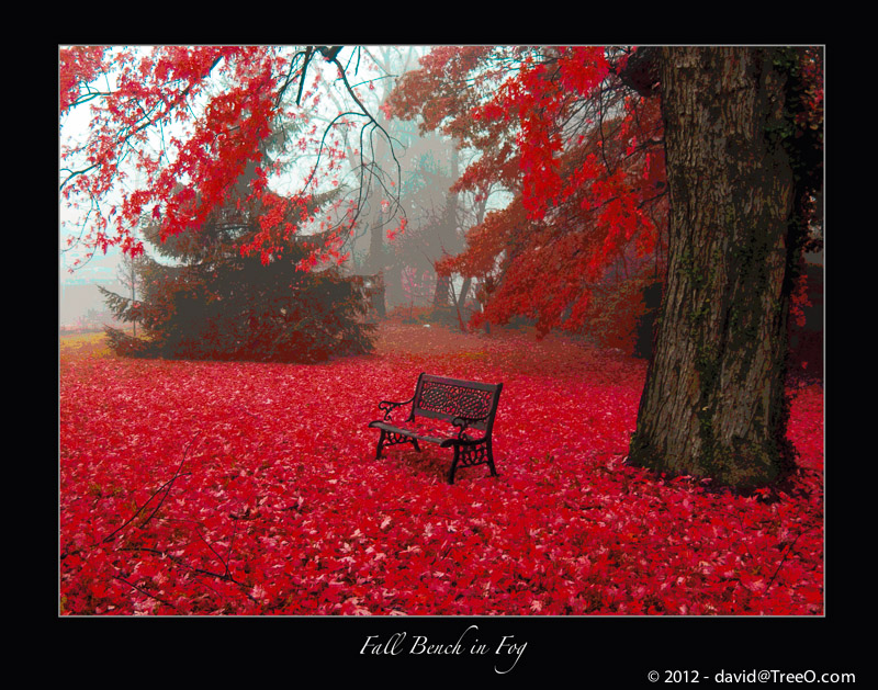 Fall Bench in Fog