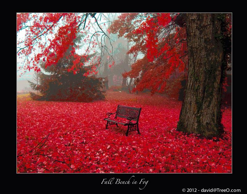 Fall Bench in Fog