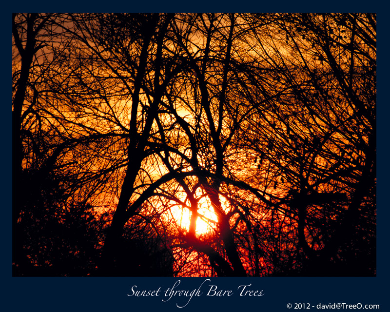 Sunset through Bare Trees