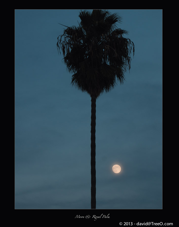Moon & Royal Palm