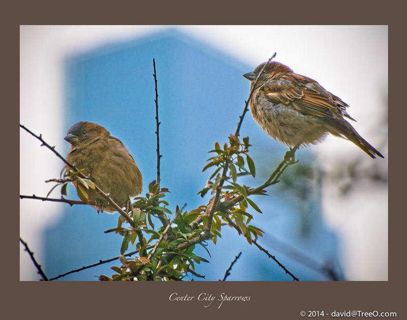 Center City Sparrows