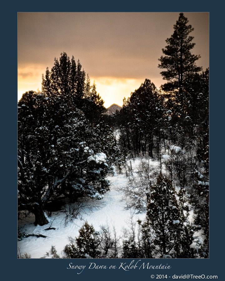 Snowy Dawn on Kolob Mountain