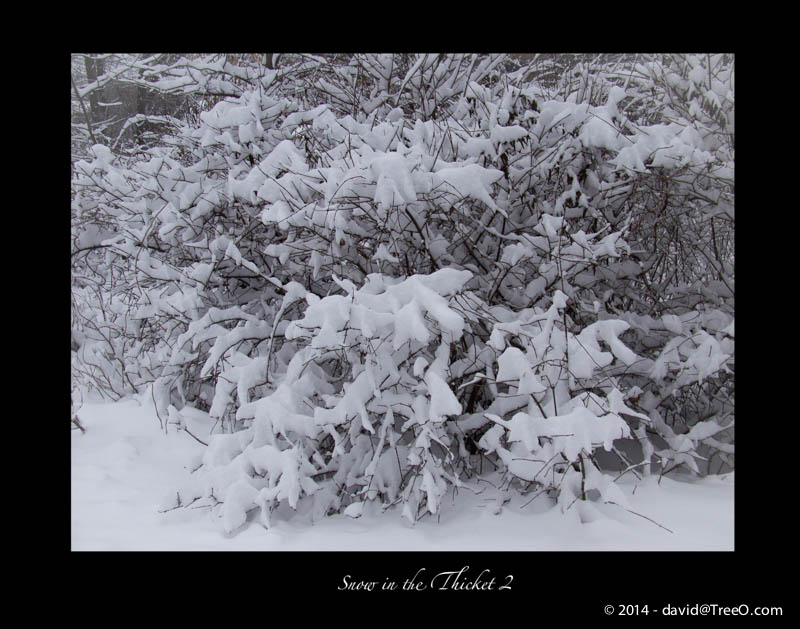 Snow in the Thicket 2