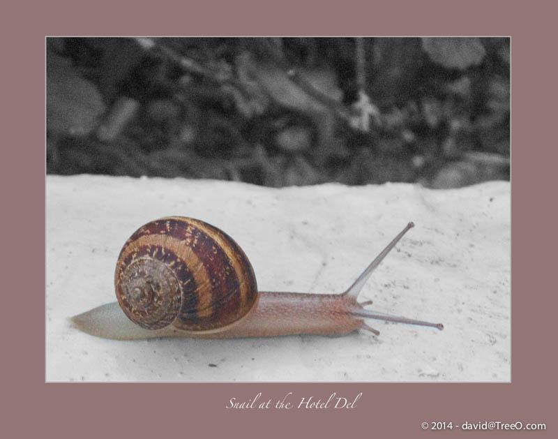 Snail at the Hotel Del
