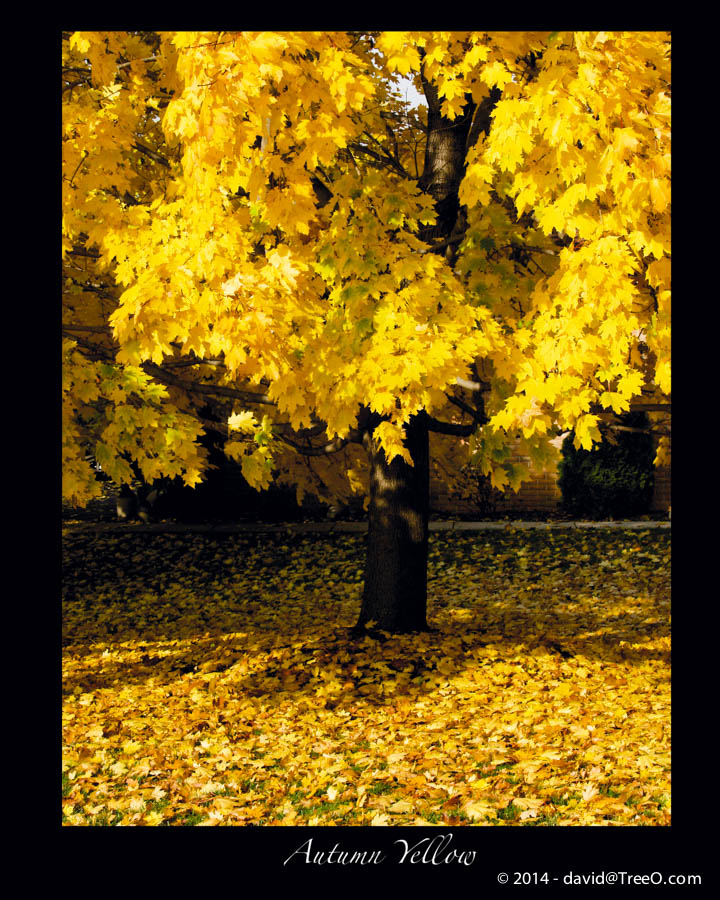 Autumn Yellow