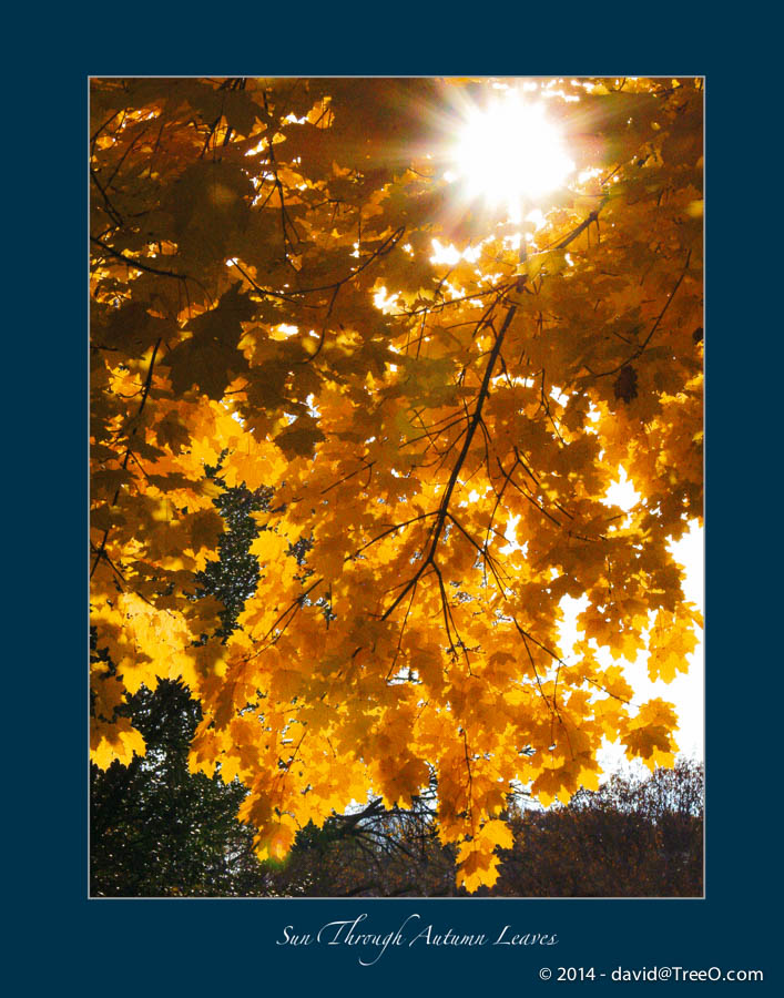 Sun Through Autumn Leaves