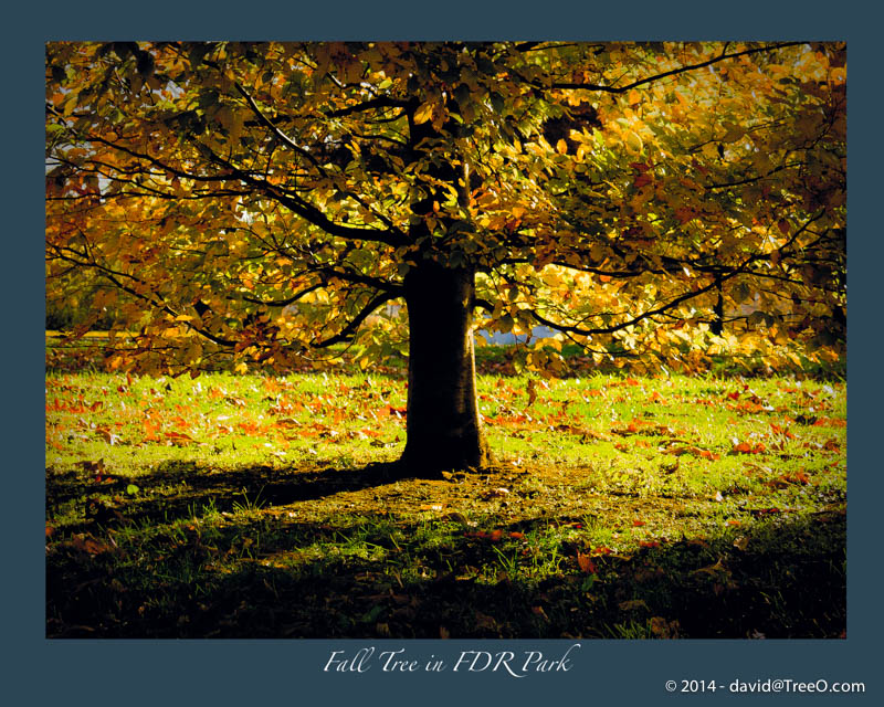 Fall Tree in FDR Park