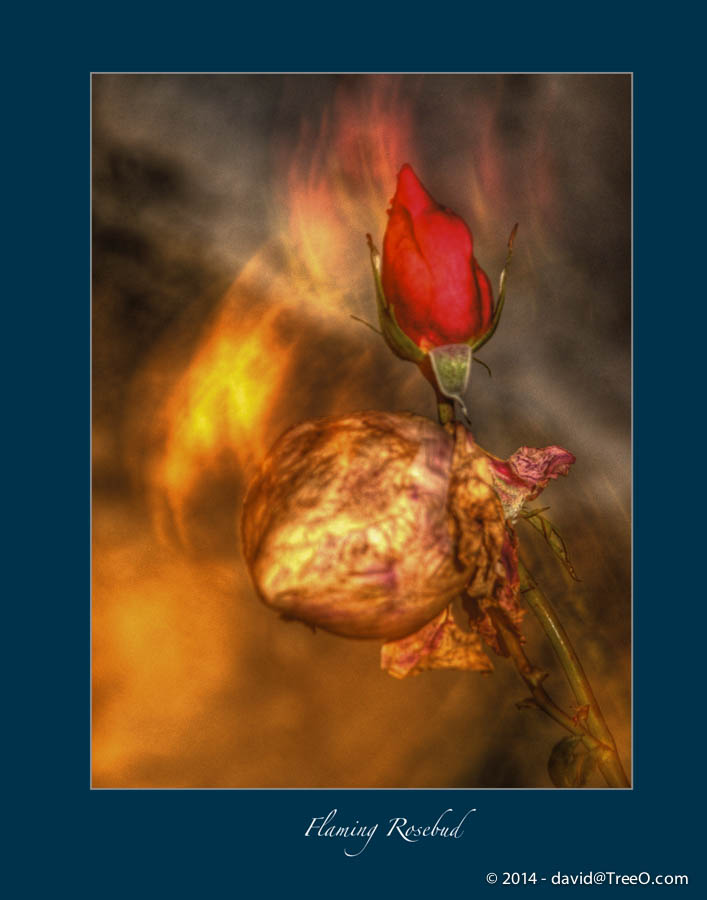 Flaming Rosebud
