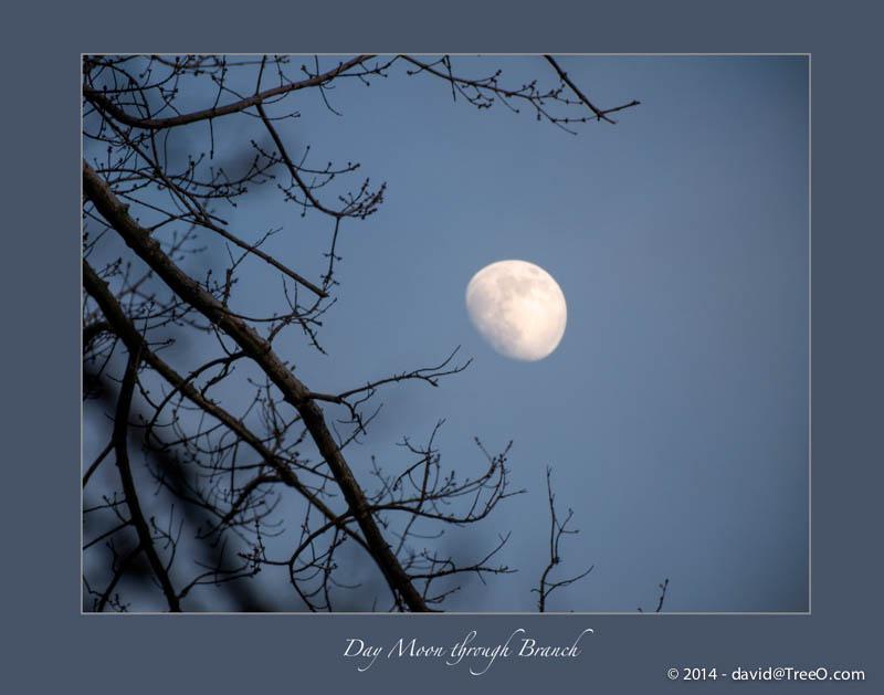 Day Moon through Branch