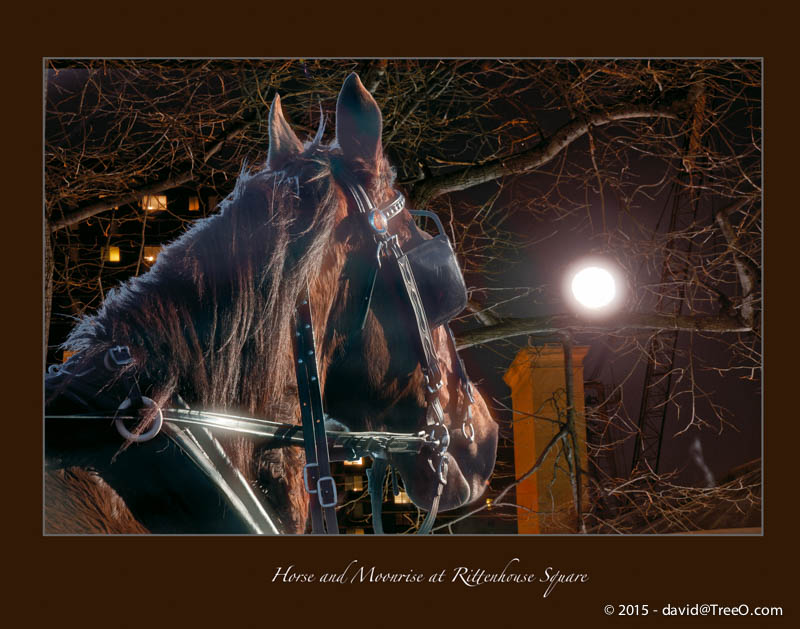 Horse and Moonrise at Rittenhouse Square