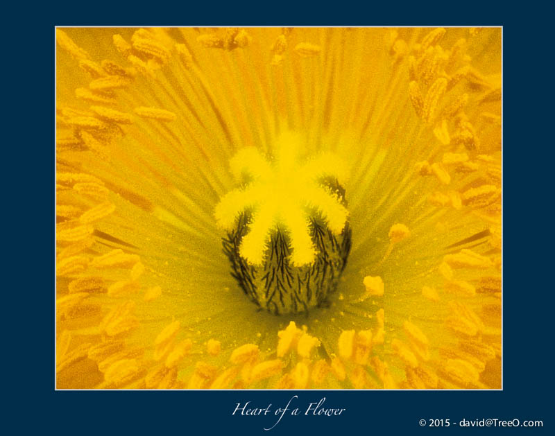 Heart of a Flower