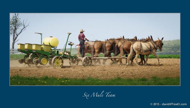 Six Mule Team
