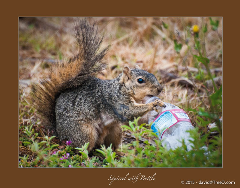 Squirrel with Bottle
