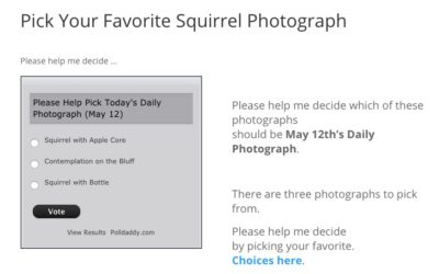 Pick Your Favorite Squirrel Photograph
